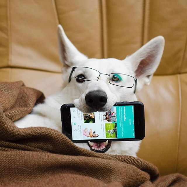 @gloria_wssd loves showing off the new Discover feature in the Fetch My Pet iPhone app.