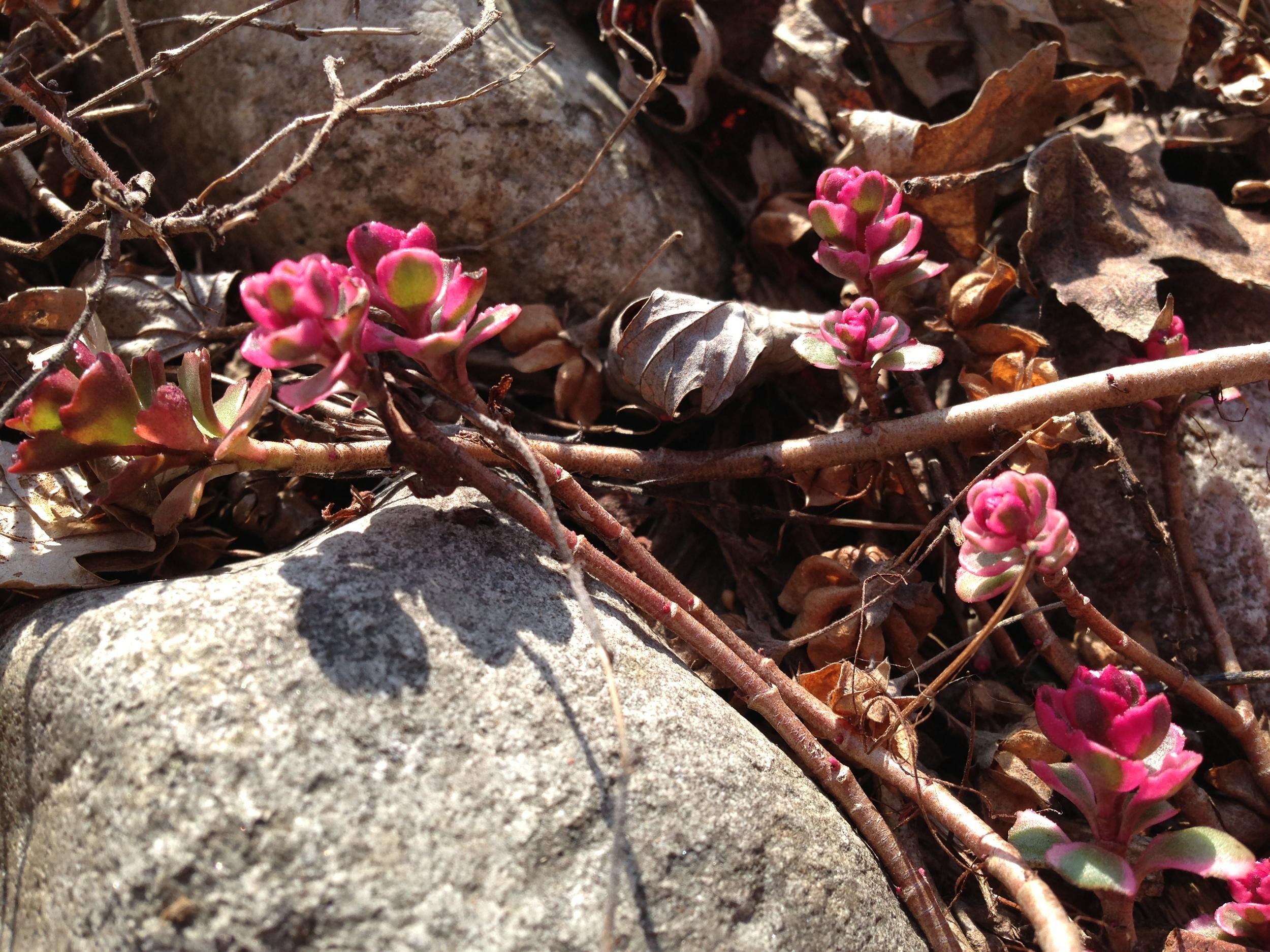 rock crop 1