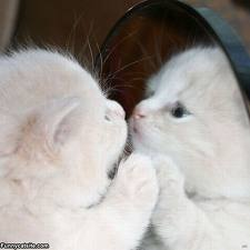 cute kitty mirror