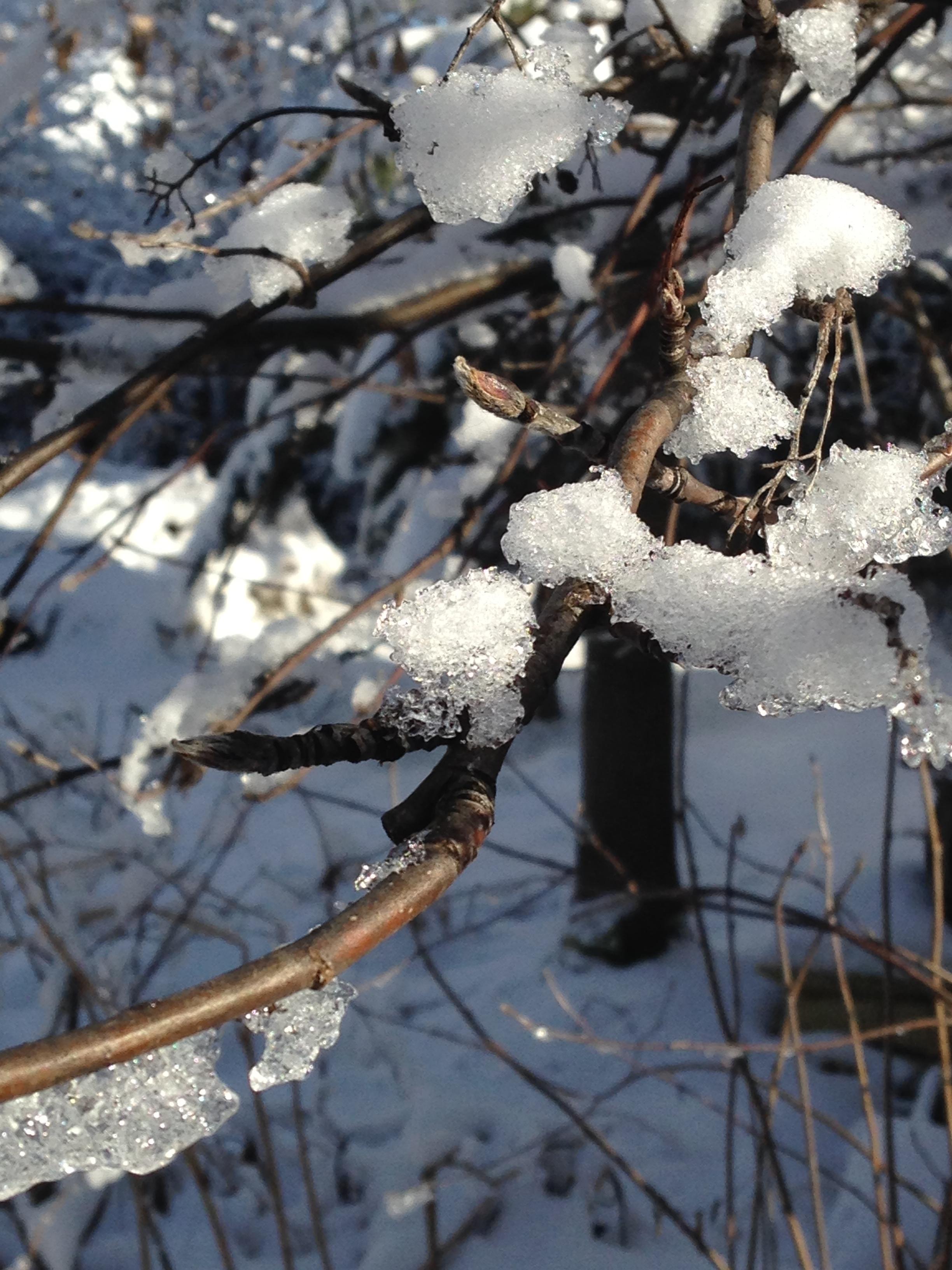 Snowday 2014-12-19 12.47.33 (2)
