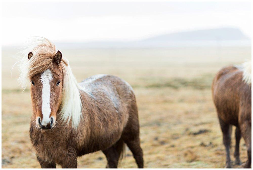 Iceland_Photography_0087.jpg