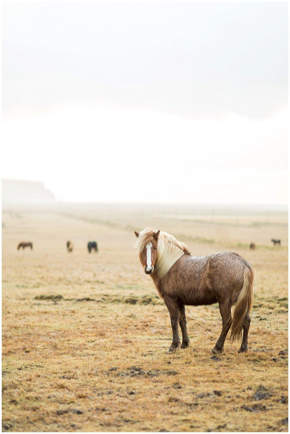 Iceland_Photography_0093.jpg