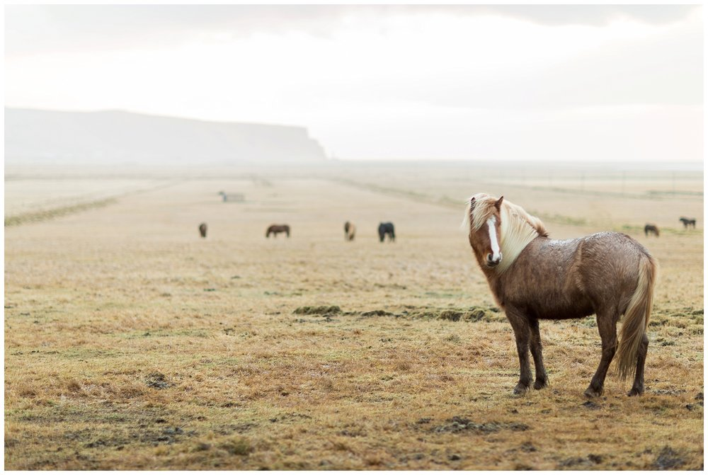 Iceland_Photography_0095.jpg