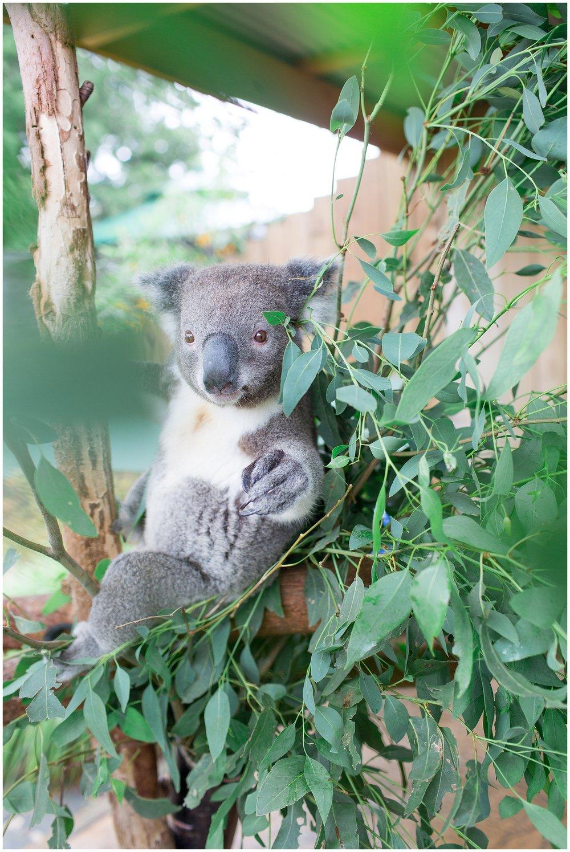 Australia_0040.jpg
