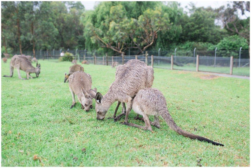 Australia_0043.jpg