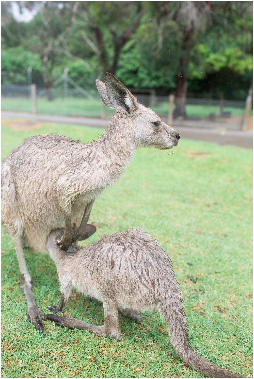 Australia_0048.jpg