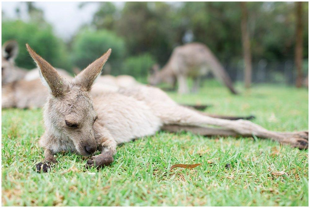 Australia_0056.jpg