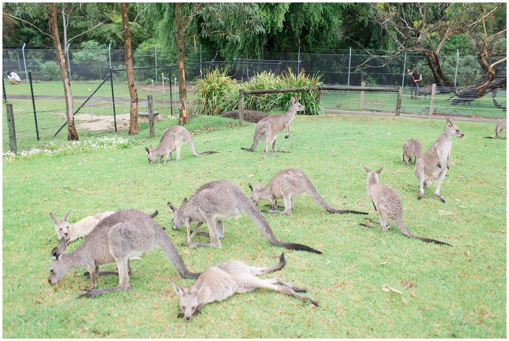 Australia_0063.jpg
