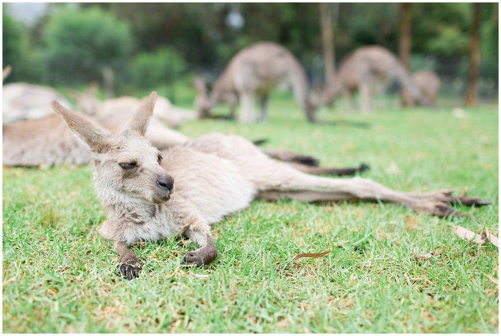 Australia_0066.jpg