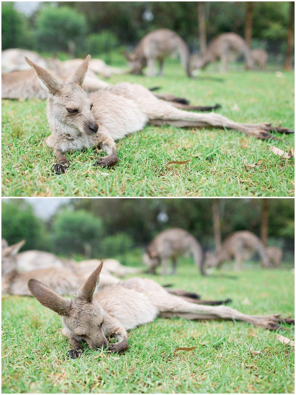 Australia_0065.jpg