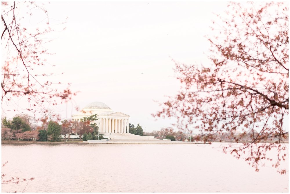 Cherry_Blossom_Proposal_DC_0000.jpg
