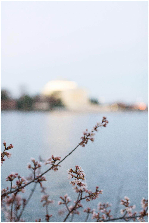 Cherry_Blossom_Proposal_DC_0034.jpg