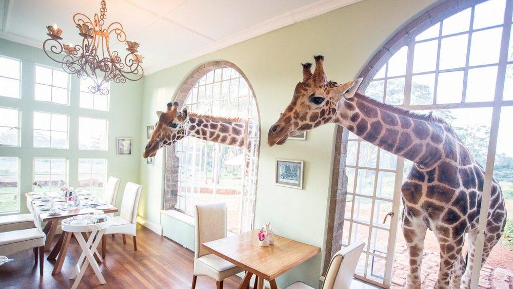 Famous-Feeding-Balcony-at-Giraffe-Manor-1600x900.jpg