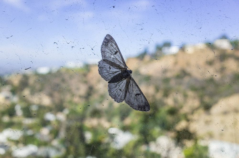 mothra in the hills, west hollywood, los angeles_2014.jpg
