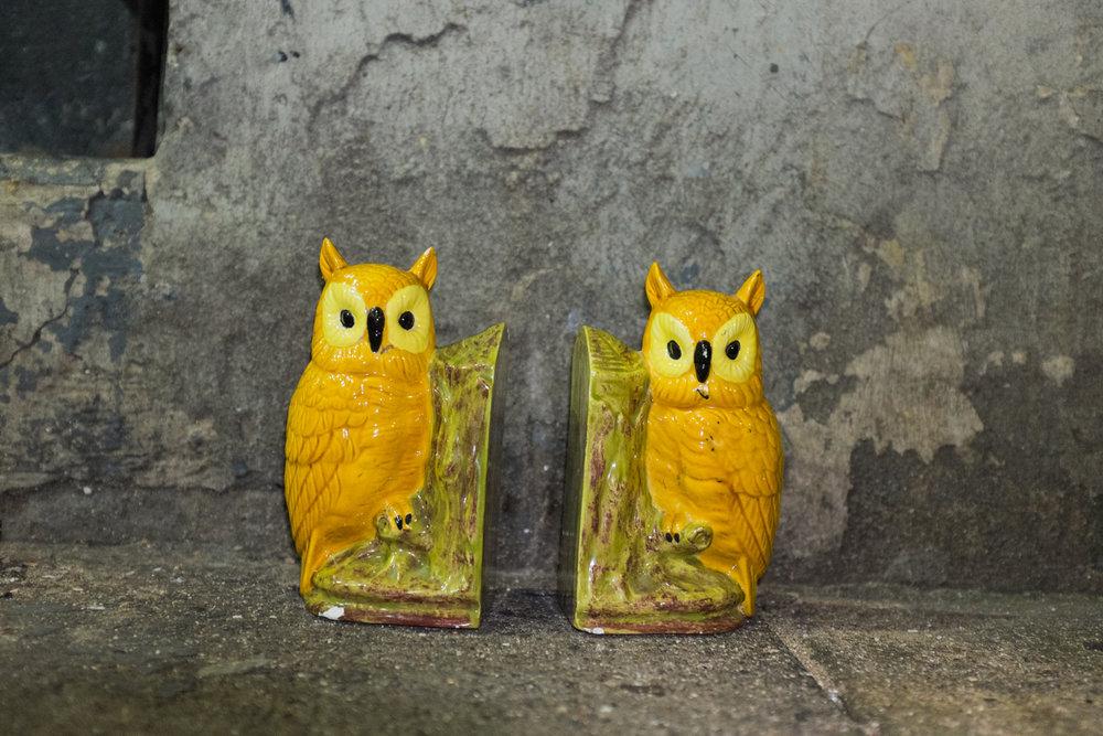 owls_II_2014.jpg