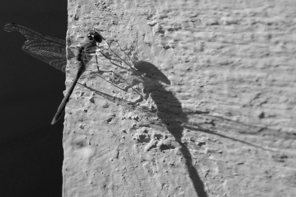dragonfly_2014.jpg