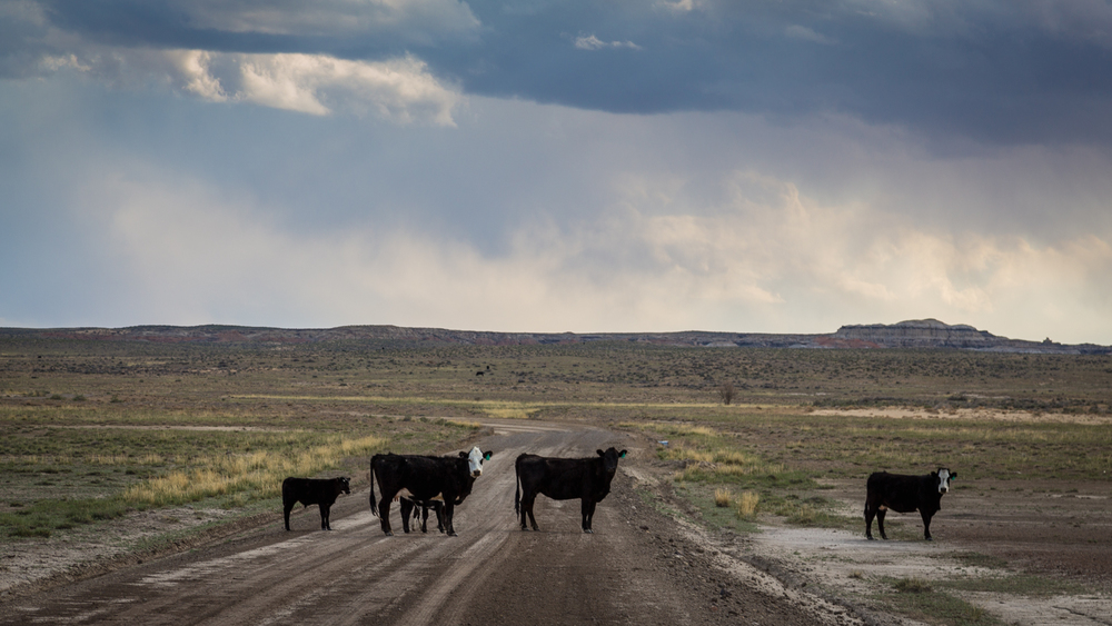 New Mexico Road Block