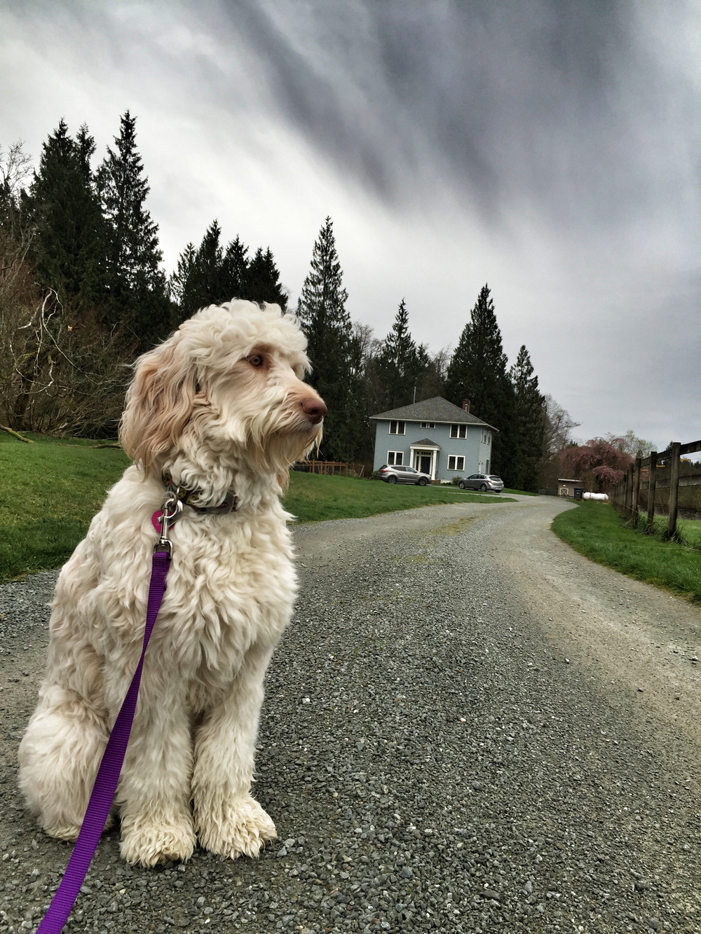 Penny waits to get rained upon.