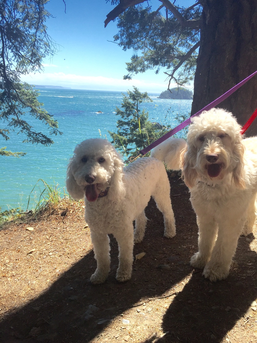 Tilly and Penny with Deception Pass behind them. Photo by Audrey.