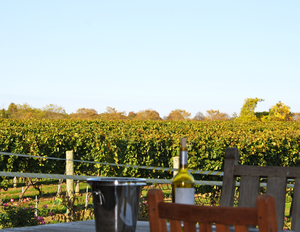 Wolffer Estate Vineyard