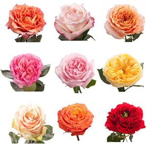 Garden Roses Maui