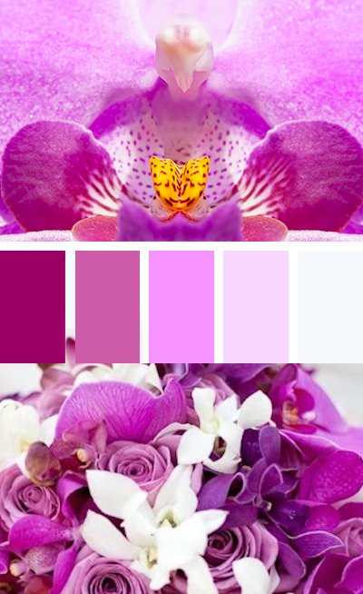 Orchid-palette.jpg
