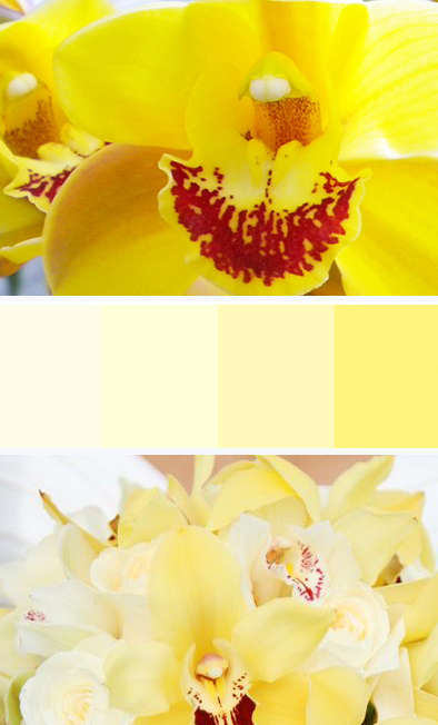 yellow-palette.jpg