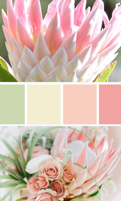 pink-color-palette.jpg