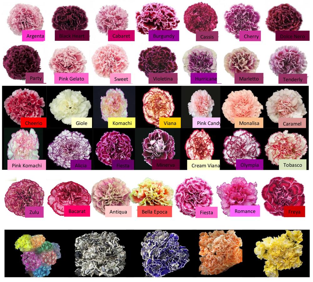 carnations-specialty.jpg