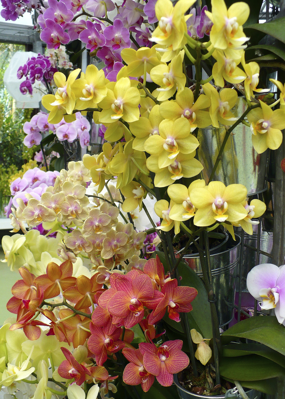 maui-wholesale-blooms-412.jpg
