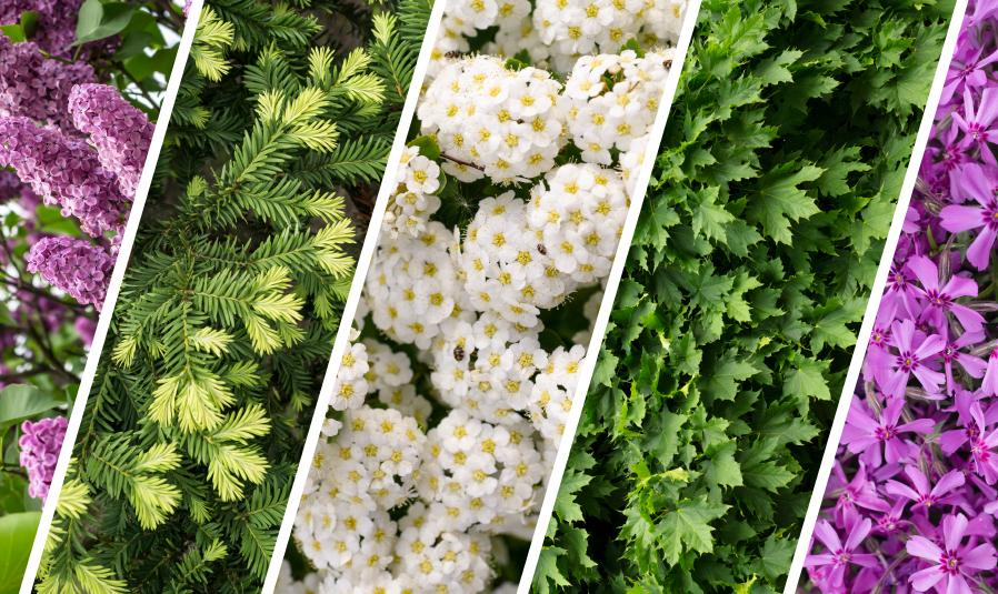 maui-wholesale-florist-3452.jpg
