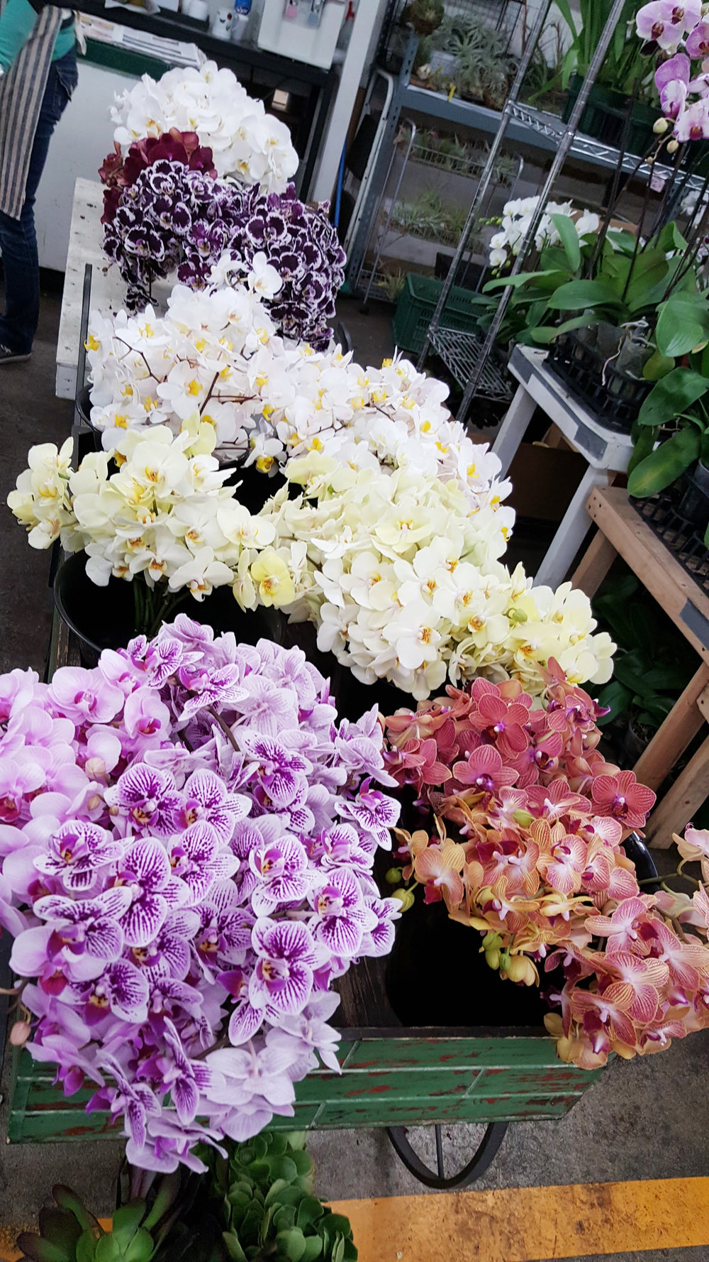 maui-wholesale-blooms-orchids.jpg