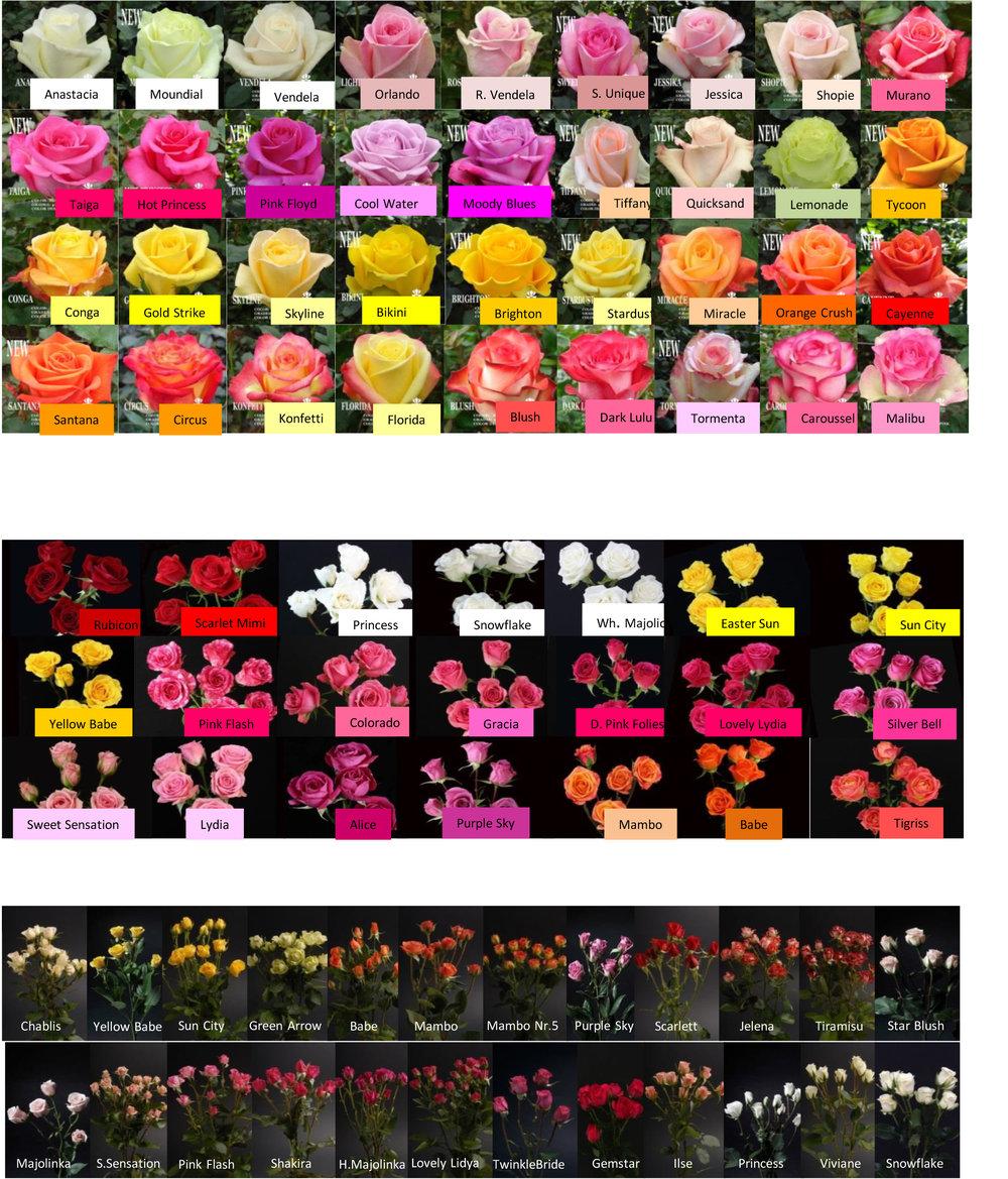 rose-varieties-2.jpg