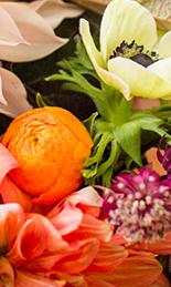flower-varieties.jpg