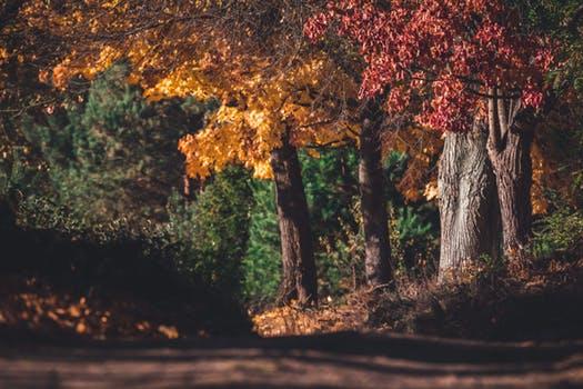 fall trail.jpeg