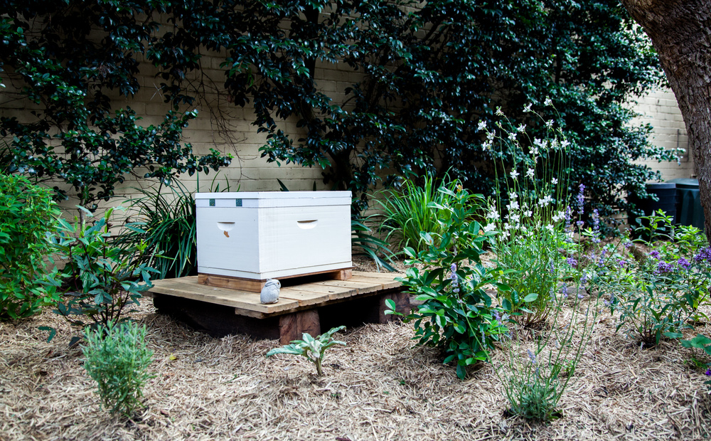 UrbanGrowers-Garden1-2.jpg