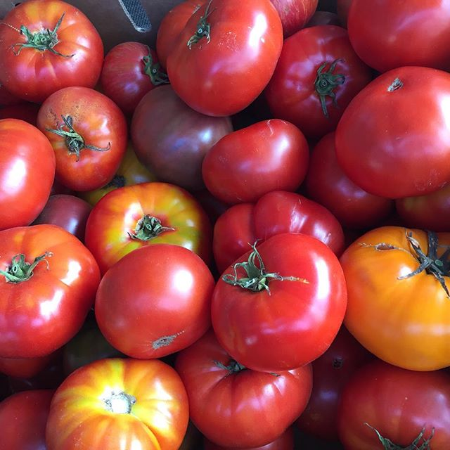 Ripe heirloom tomatoes harvested in Petaluma at Allstar Organics farm. #heirloom #tomatoes #marinfarmersmarket #petaluma #allstarorganics #localfood #organic