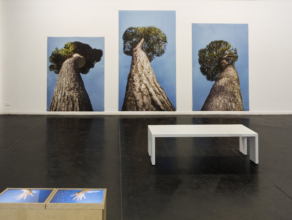 treeshandscrop.jpg