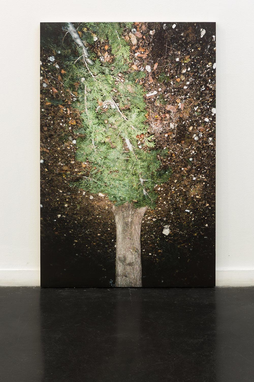 untitled tree.jpg