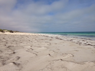 Rugged untouched beach, beautiful water, but no swimming! Too many Great Whites!