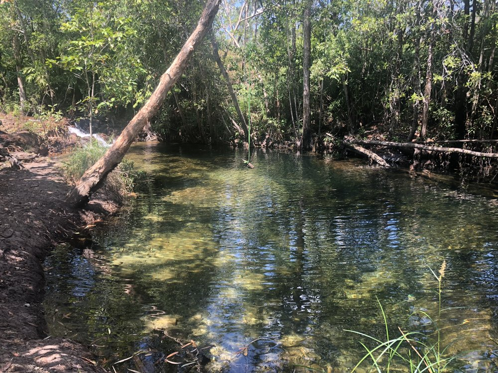 Many delightful pristine swimming holes along Walker Creek. Not a croc in sight!