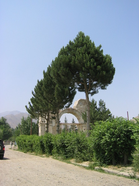 Those conifer trees — a big reason why I fell in love with Afghanistan