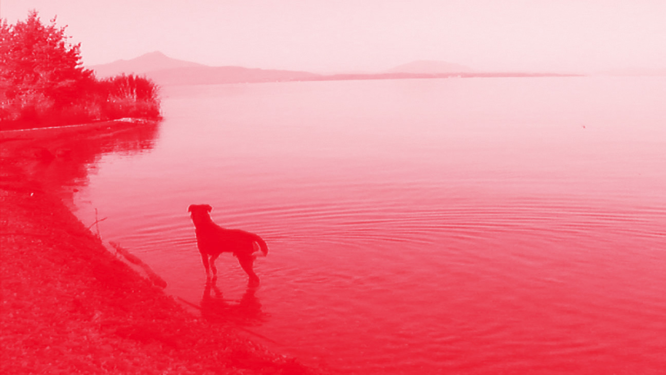 essays iiiixiii blood in the water jean luc godard s adieu au langage