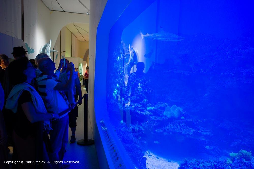 Aquarium at Karlsruhe's Nature Museum.