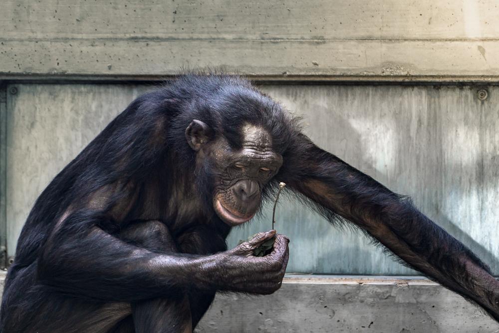 Was will uns der Affe mit seiner Blume in der Hand erzählen?