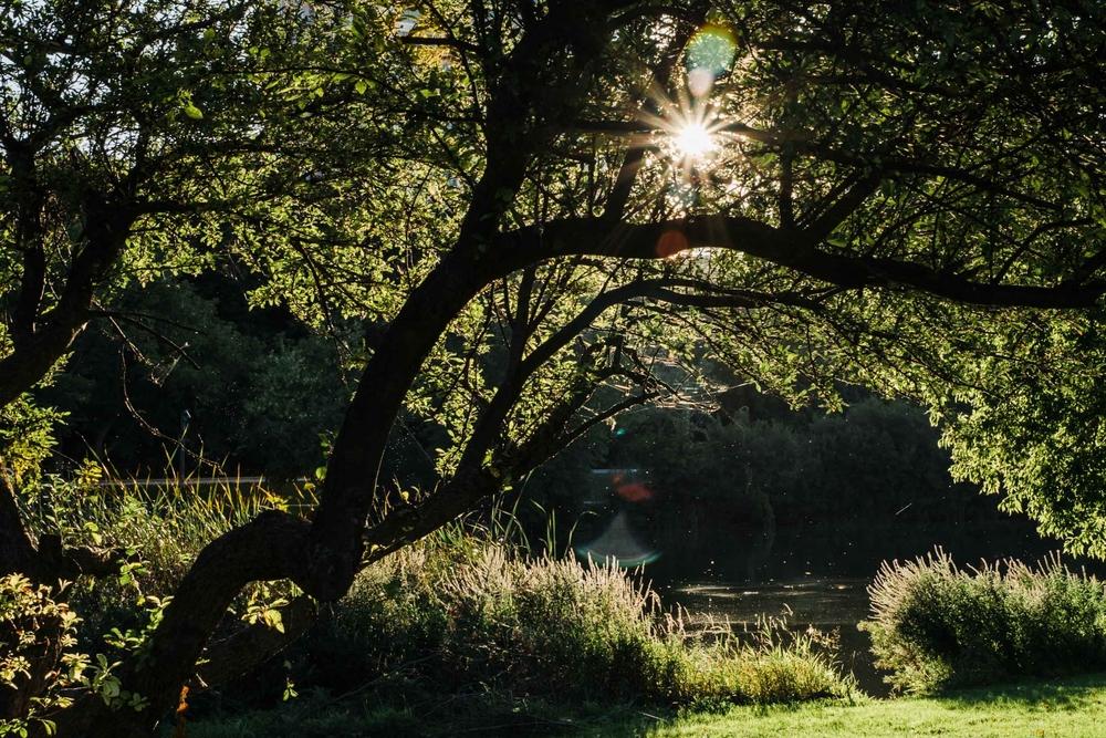 Nature (6).JPG