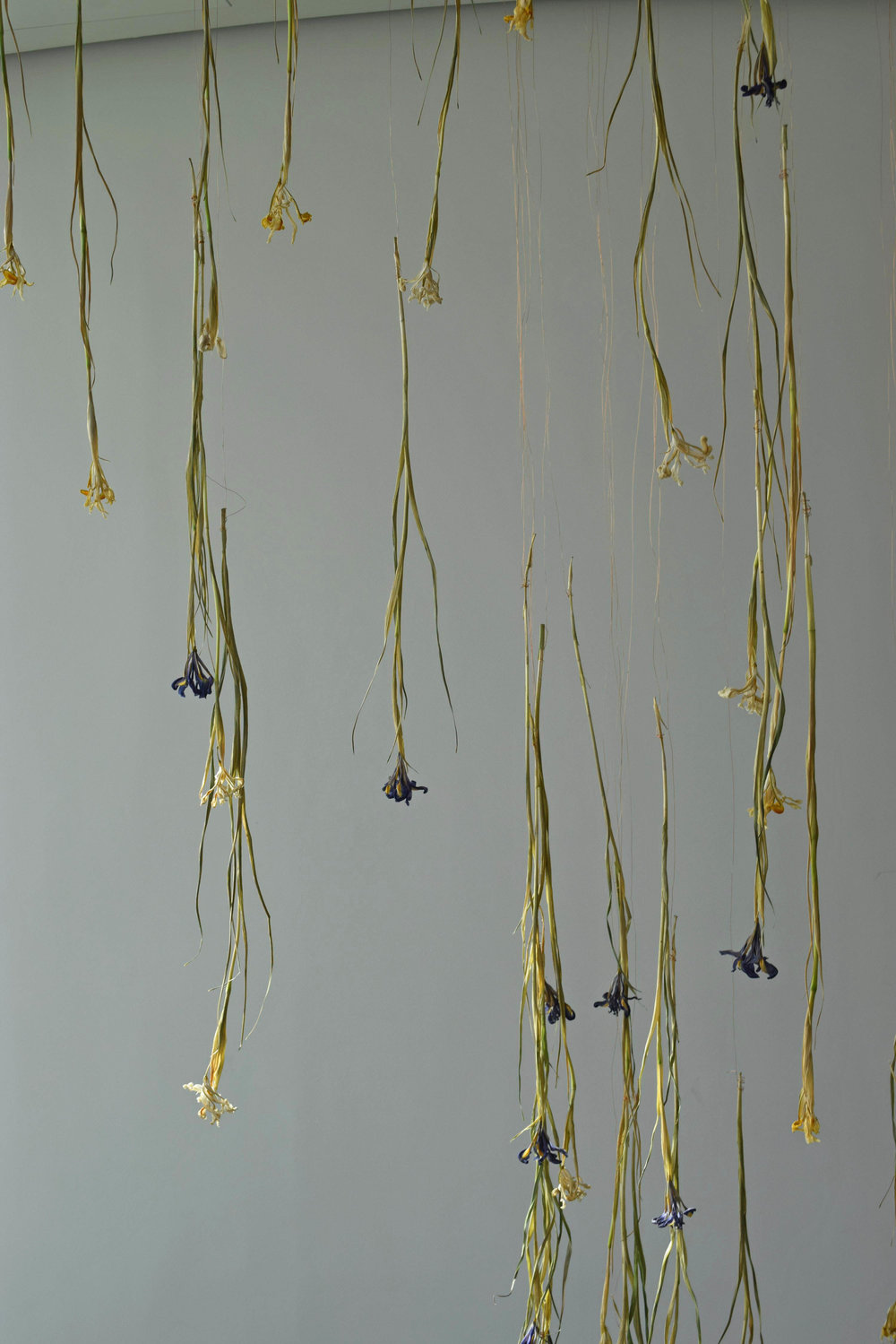 4 Things to learn form a Flower Installation Iris - ©Detail Movement