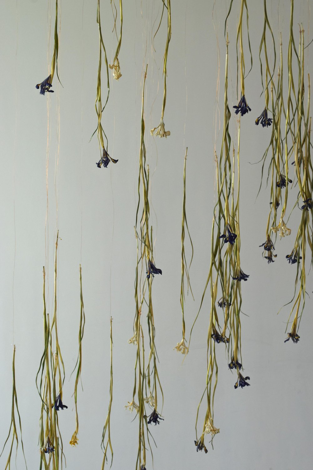 4 Things to learn form a Flower Installation Iris 3 - ©Detail Movement