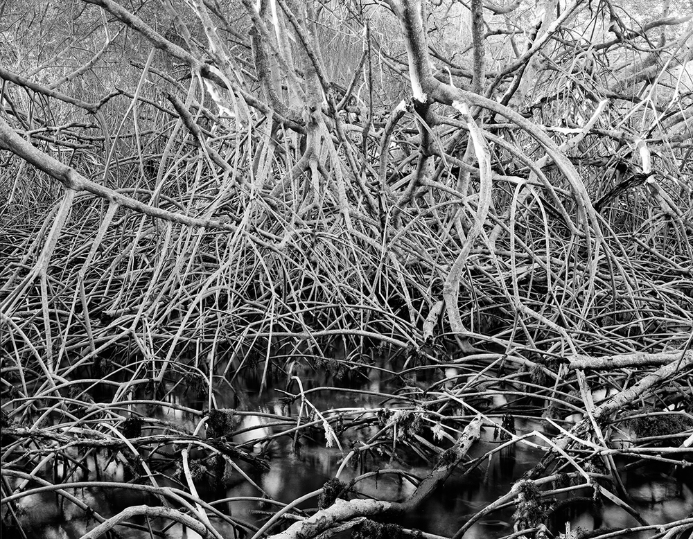 Mangrove_horizontal2_layers.jpg