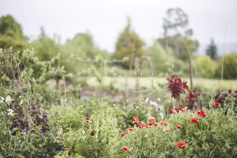 CURATED CUTTING GARDENS -